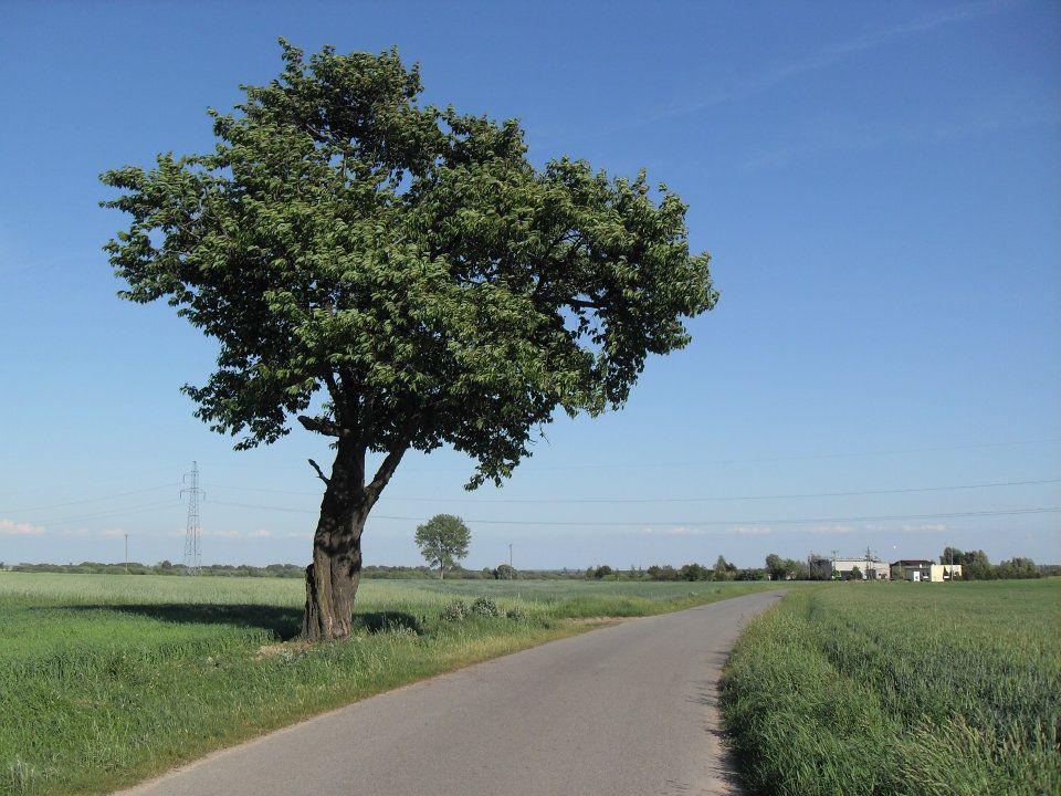 Trasa nr 1 Perzów – Nieprosin